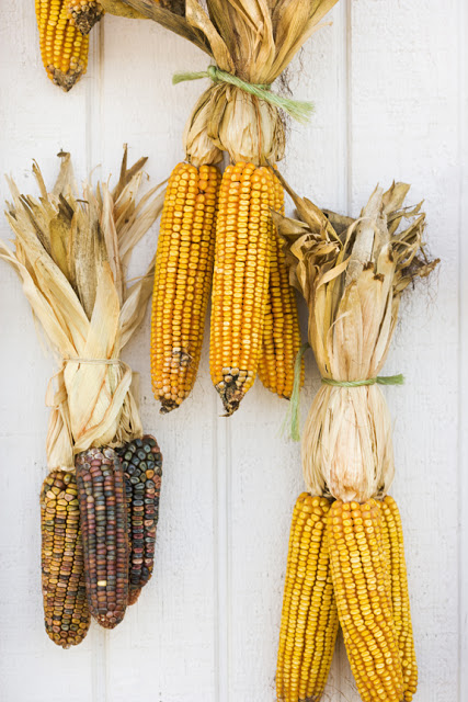 L'oro giallo: il mais!